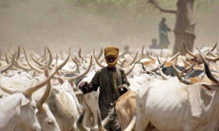 Sédhiou : le vol de bétail devient monnaie courante