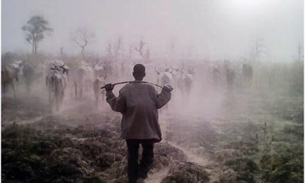 Divagation des animaux : source de conflits entre éleveurs et agriculteurs duWalo