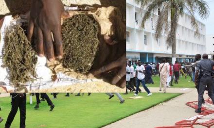 UCAD : 7 personnes interpellées avec 500 g de yamba