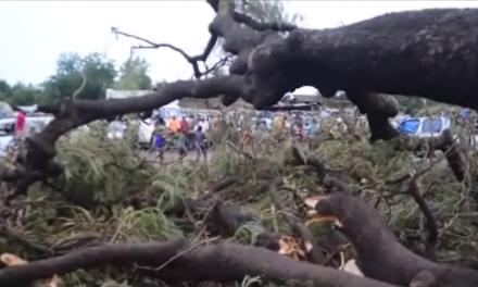 CHUTE D'UN ARBRE A KEDOUGOU – Deux morts et trois blessés graves