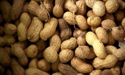 Sénégal : la production d'huile d'arachide cause une perte de revenus, selon la Banque mondiale