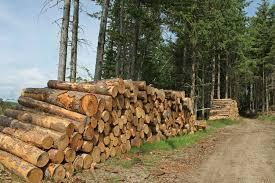 Coupe abusive de bois à Kolda : L'Etat invité à prendre ses responsabilités