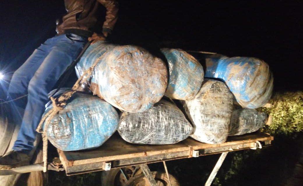 THIES : L'Ocrtis saisit 660 kg de chanvre indien (Images)