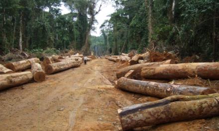 FORET CLASSEE DE BOFFA BAYOTTE- Des chercheurs de bois ciblés par des personnes armées
