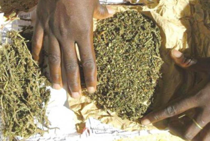 KEDOUGOU – 248 kg de chanvre indien saisis