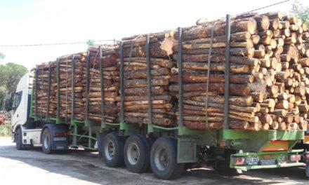 TRAFIC DE BOIS : deux camions gambiens saisis