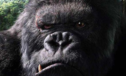 PARCE DE HANN – Autopsie après la mort d'un King-Kong