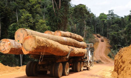 CASAMANCE – Un géographe alerte sur l'exploitation illégale du bois