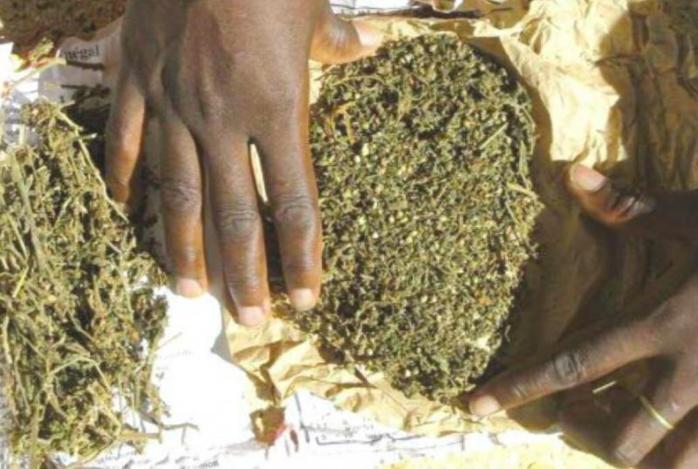 ZIGUINCHOR – 9 kg de chanvre indien saisis par la Douane