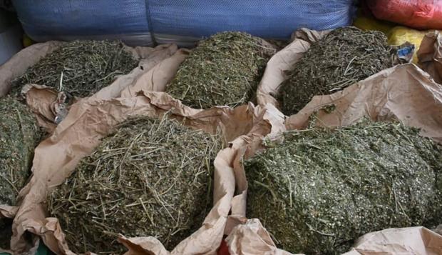 KOUNGHEUL – Une cargaison de 2,2 tonnes de chanvre indien saisie par les Douanes