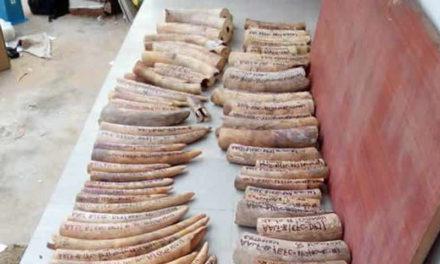 CRIMINALITE FAUNIQUE – Deux étrangers pris en possession de 48 griffes de 3 lions à Dakar