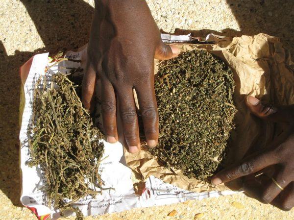 JOAL – 72 kg de chanvre indien saisis par la gendarmerie