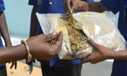 DIOURBEL – 55 kg de chanvre indien saisis
