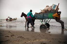 IMPLANTATION DE NOUVELLES USINES DE FARINE ET D'HUILE DE POISSON – Greenpeace Afrique et les pêcheurs crient au scandale